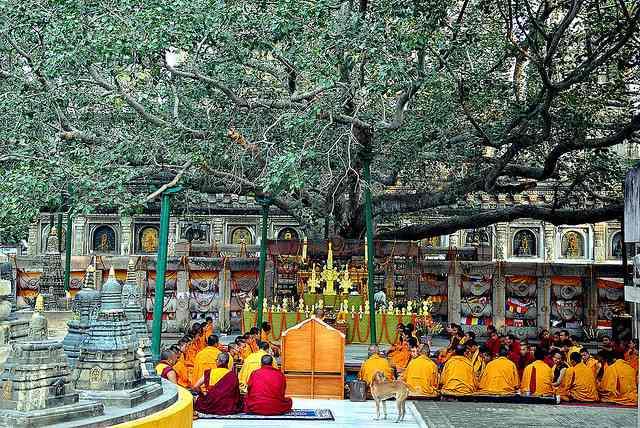 Bodhi-tree