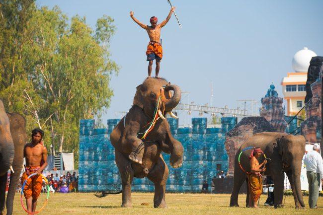 Surin-Elephant
