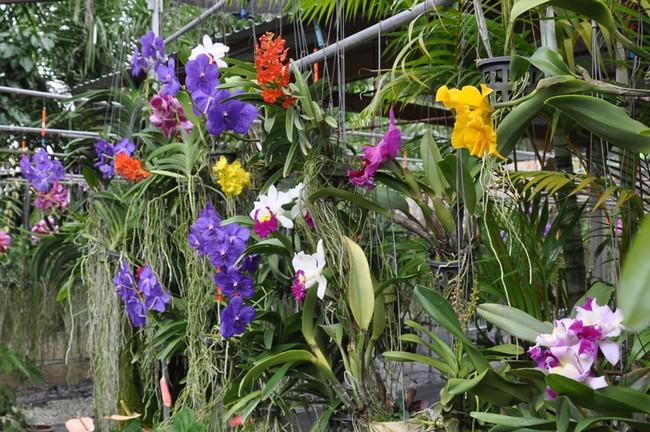 Сад орхидей Пхукет