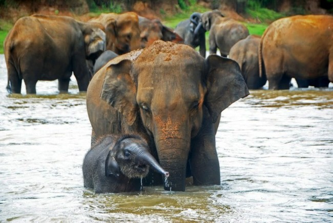 Слоновий питомник