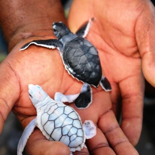 черепаховые фермы